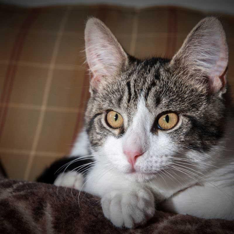 bronhitis kod mačaka uzrok