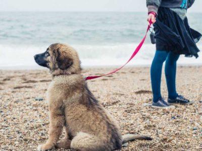 kada štene može u šetnju