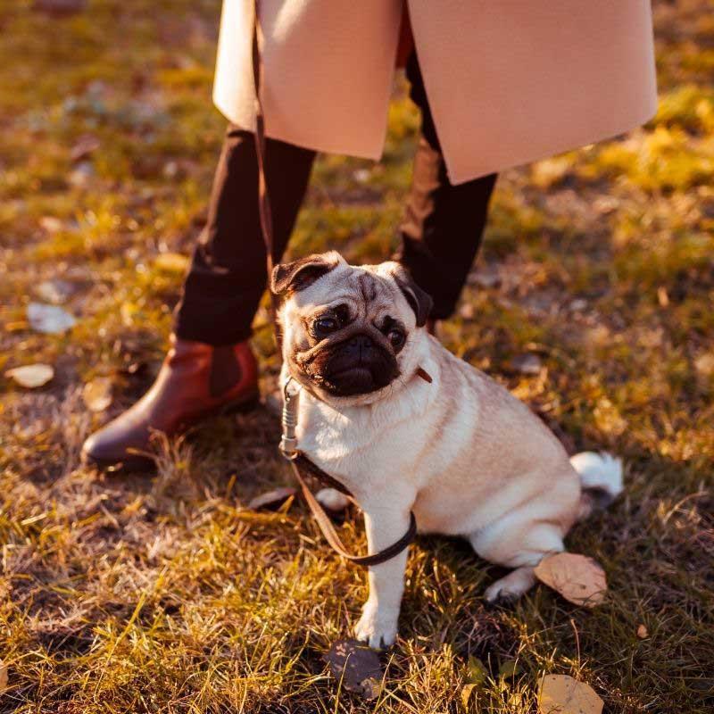 kada štene može u prvu šetnju