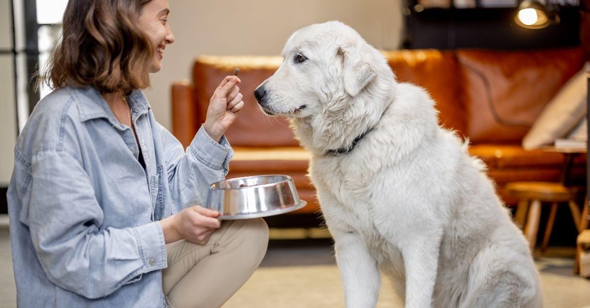 doziranje hrane za pse