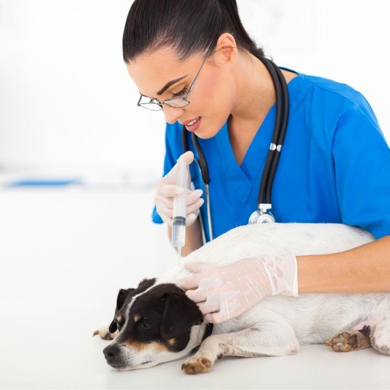 vakcina za štenećak cena