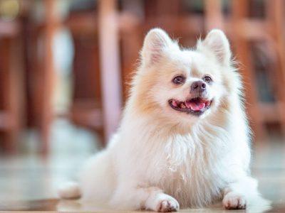 ubrzano disanje kod pasa